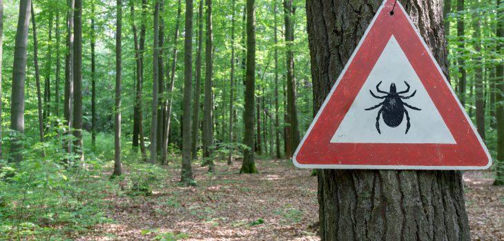 trójkątna biała tablica z czerwoną obwódką z kleszczem na środku, przytwierdzona do drzewa w lesie