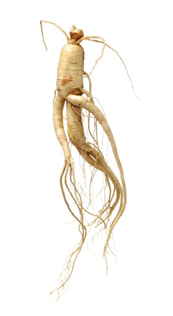 biały korzeń rosłiny